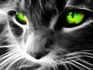 Postal: Gato