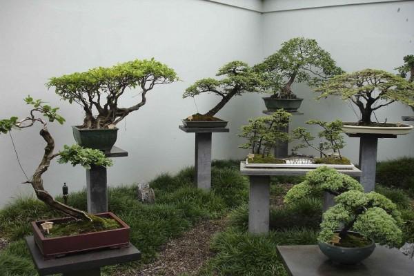 Árboles bonsai en una exhibición en el Jardín Chino de Sydney, Australia