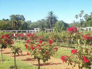 Postal: Rosedal Palermo, Buenos Aires (Parque 3 de Febrero)