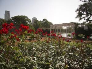 """Rosedal en el parque """"Tres de Febrero"""""""