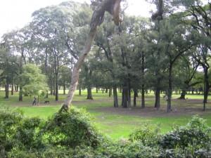 Postal: Bosques del barrio de Palermo, en Buenos Aires