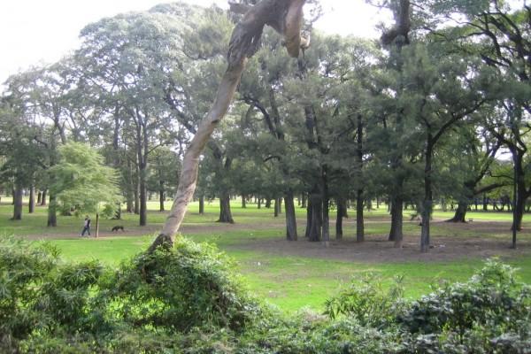 Bosques del barrio de Palermo, en Buenos Aires