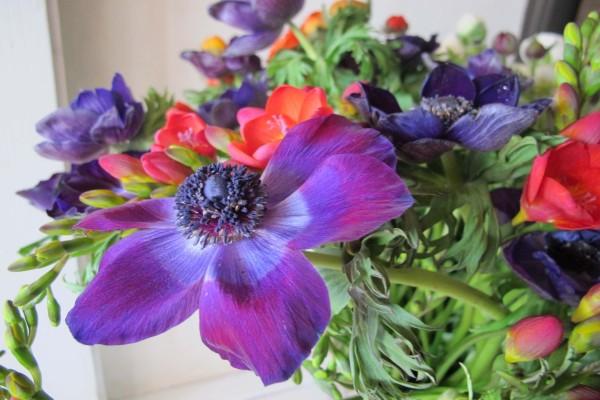 Ramo con grandes flores moradas y fresias rosas