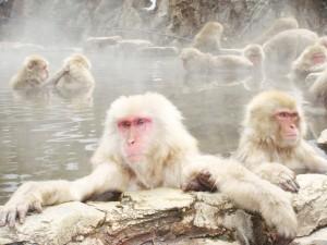 Monos en remojo