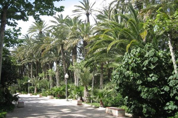 Conjunto de palmeras en el Parque Municipal de Elche (España)