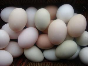 Postal: Huevos