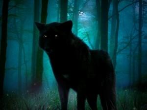Postal: Lobo negro en las sombras