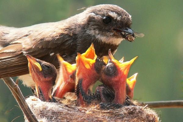 Pájaro alimentando a sus crías