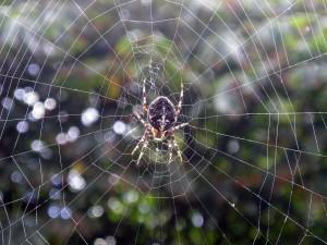 Postal: Araña en el jardín