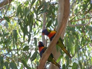 Pájaros en las ramas de un árbol