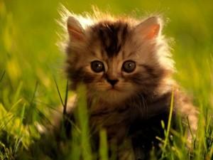 Gatito con cara de circunstancia