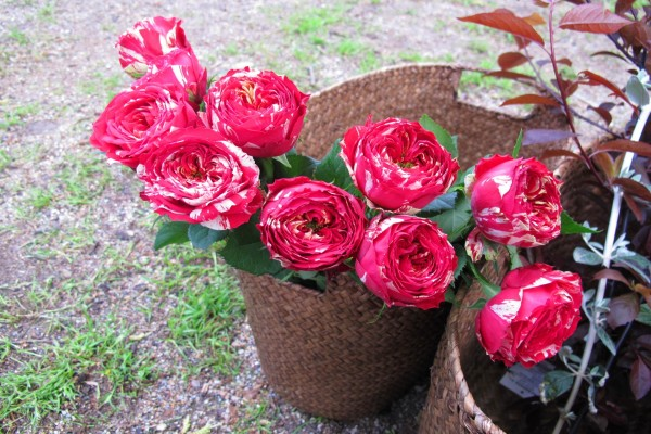 Cesta con bonitas y grandes flores
