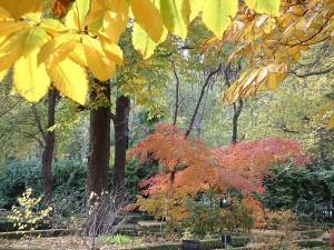 Otoño en el Jardín Botánico (Madrid, España)