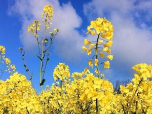 Postal: Plantas con flores amarillas