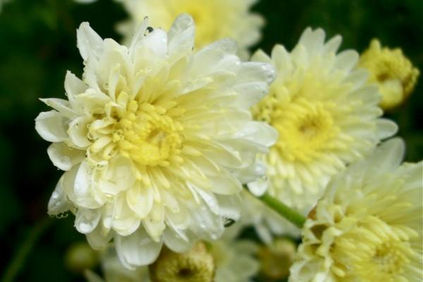 Flores con rocío