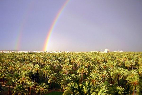 Arcoiris sobre el Palmeral de Elche (España)