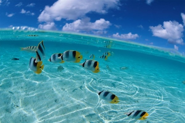 Aguas tropicales