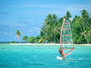 Windsurf con palmeras al fondo