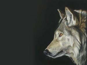Postal: Lobo