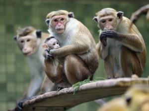 Postal: Monos en familia