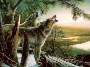 Postal: Lobos aullando