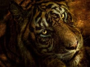 Postal: Tigre