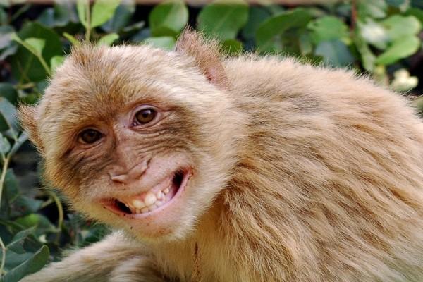 Mono riendo