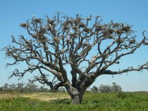 Árbol de ramas desnudas