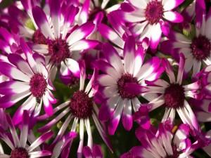 Bellas flores blancas y púrpuras