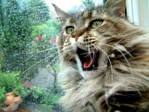 Postal: Gato bostezando