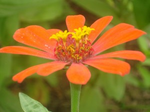 Flor de color naranja