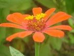 Flor de color naranja