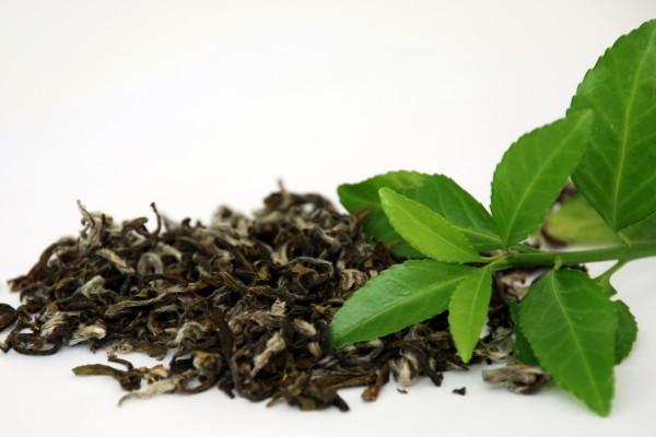 Hojas de té secas y frescas