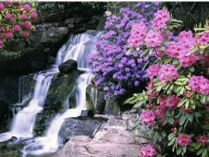 Postal: Cascada rodeada de azaleas