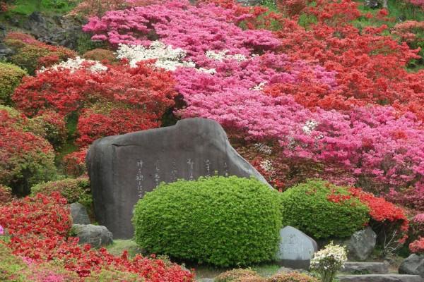Azaleas de varios colores en un parque de Japón