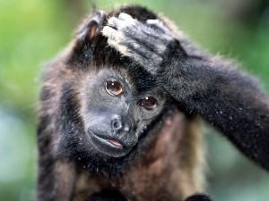 Postal: Un mono con la mano en la cabeza