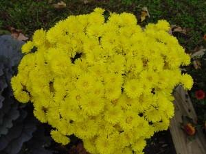 Flores amarillas