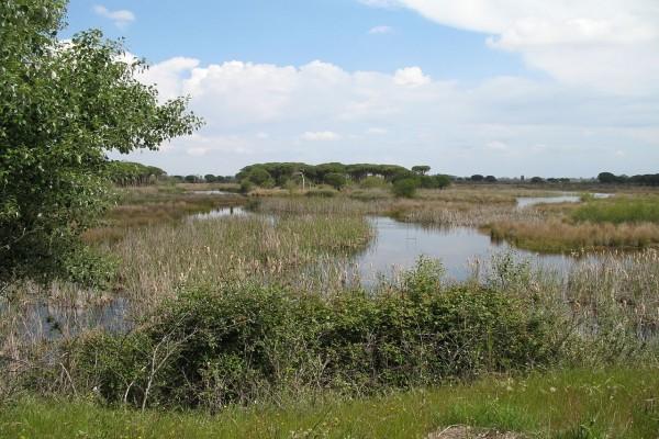 Parque Nacional Doñana (Huelva, España)