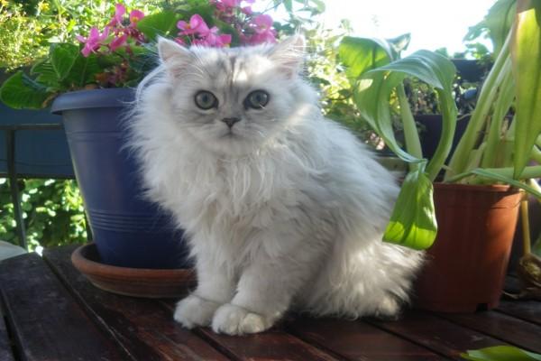 Pequeño gato entre macetas