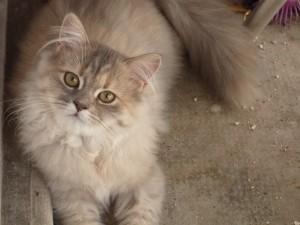 Preciosa mirada de un gato
