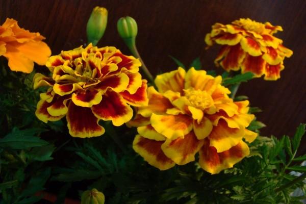 Flores de tonos naranjas y amarillos