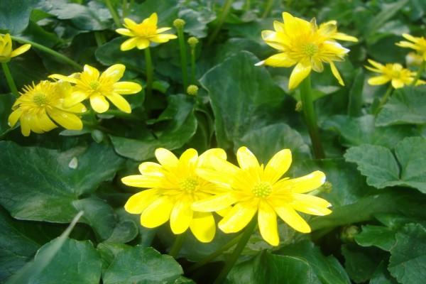 Plantas de hojas verdes con flores amarillas