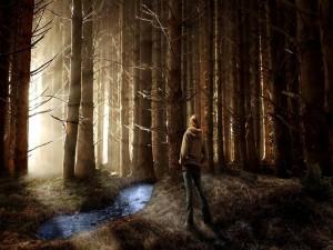 Postal: Misterioso bosque