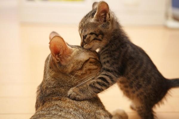 Besito a mamá