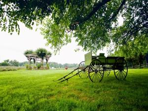 Postal: Carro sobre la hierba