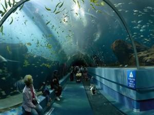 """El túnel de exhibición """"Ocean Voyager"""" (Estados Unidos)"""