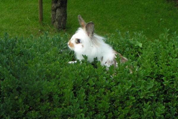 Conejito blanco