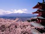 Cerezos en flor con vistas al monte Fuji
