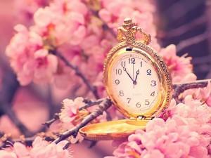 Reloj de bolsillo entre flores de cerezo