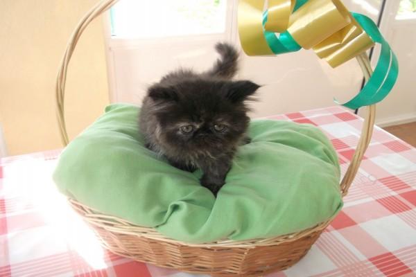 Cesta de mimbre con gatito negro